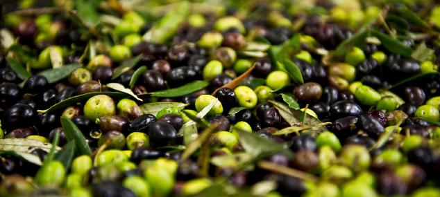 L'huile d'olive des Cinque Terre